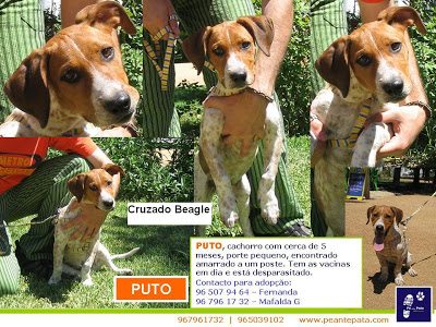 A vergonha - Cruzamentos - Fotos, problemas de linha, problemas de saúde do animal cruzado _Puto