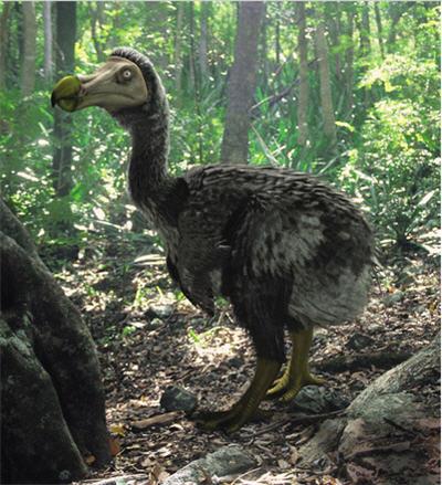 Charles Darwin Modern_dodo