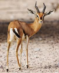un animal - Ajonc - 31 octobre trouvé par Jovany Arab2