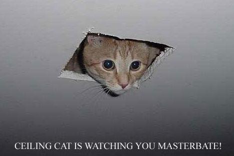 TURTLES VS. KITTENS! Ceiling_cat1