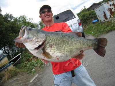 Después de 77 años sale un monstruo de Lobina / Black Bass Aflo_2009071613373894
