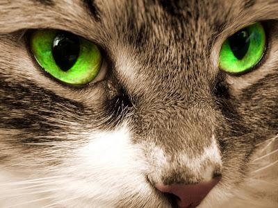 Aspenstar's world Bigstockphoto_Green_Eyes_Of_A_Cat__3002942