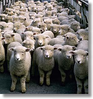 Actualités du Bouddhisme dans le monde: Nicolas Sarkozy prend Refuge dans les Trois Joyaux ce 31/03/2011 - Page 2 Moutons