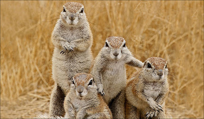 Funny Story... The Church Squirrels Squirrel-gang