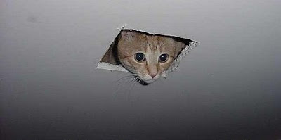 La lista de cumpleaños de l@s ángeles - Página 5 Ceiling_cat_is_watching_you_masturbate