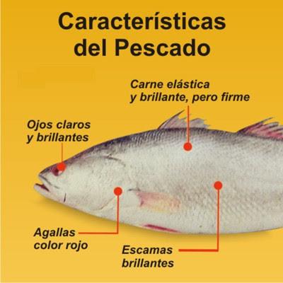 Conservación de las Capturas en Pesca Pescado