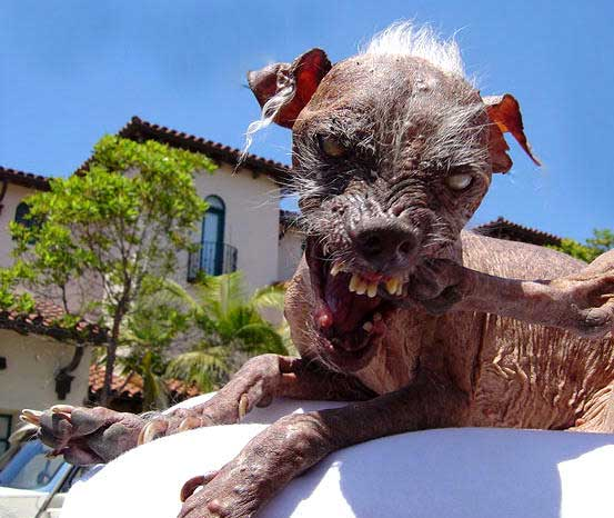 Weird Things Ugly_dog_01_560px