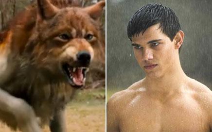 [Pop Culture Shock] American Werewolf in London Lobo-taylor