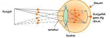 கண் - Anatomy  Mechanism-of-vision