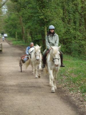 Le poney attelé... DSCF1515