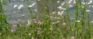 Bon Lundi Flowers