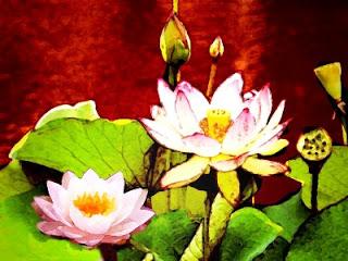 தயவு செய்து பதில் எழுது Lotus%252420pic2