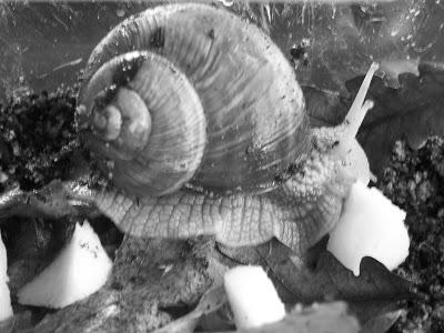 escargot 100_7423