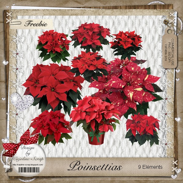 POINSETTIAS - CU Cajoline_poinsettias-cu