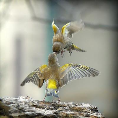 Tajanstvenim stazama duse... - Page 4 Birds%2Bflying%2Bkiss