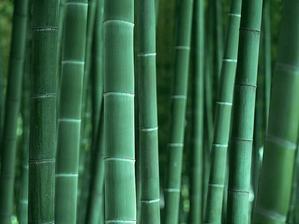 BOTON Bamboo-background