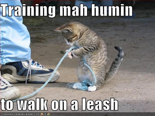Forum reorganization Funny-pictures-cat-trains-you-to-walk-on-leash