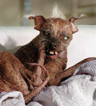 Sonus Faber Toy... atacadas a lo bestia...Sorprendente!!! Worlds-ugliest-dog