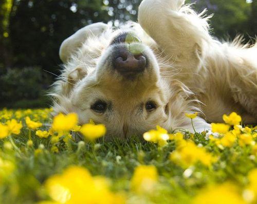Volim žuto - Page 18 Tumblr_n7vlweoPhP1sg22dvo1_500