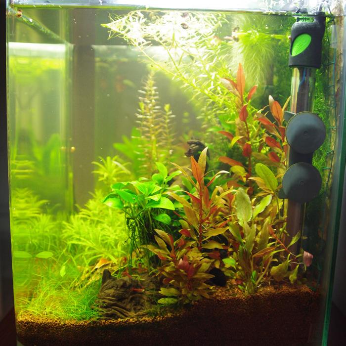 Nano 30L planté - Page 6 Tumblr_nxz6joAUHq1u6kueno4_1280