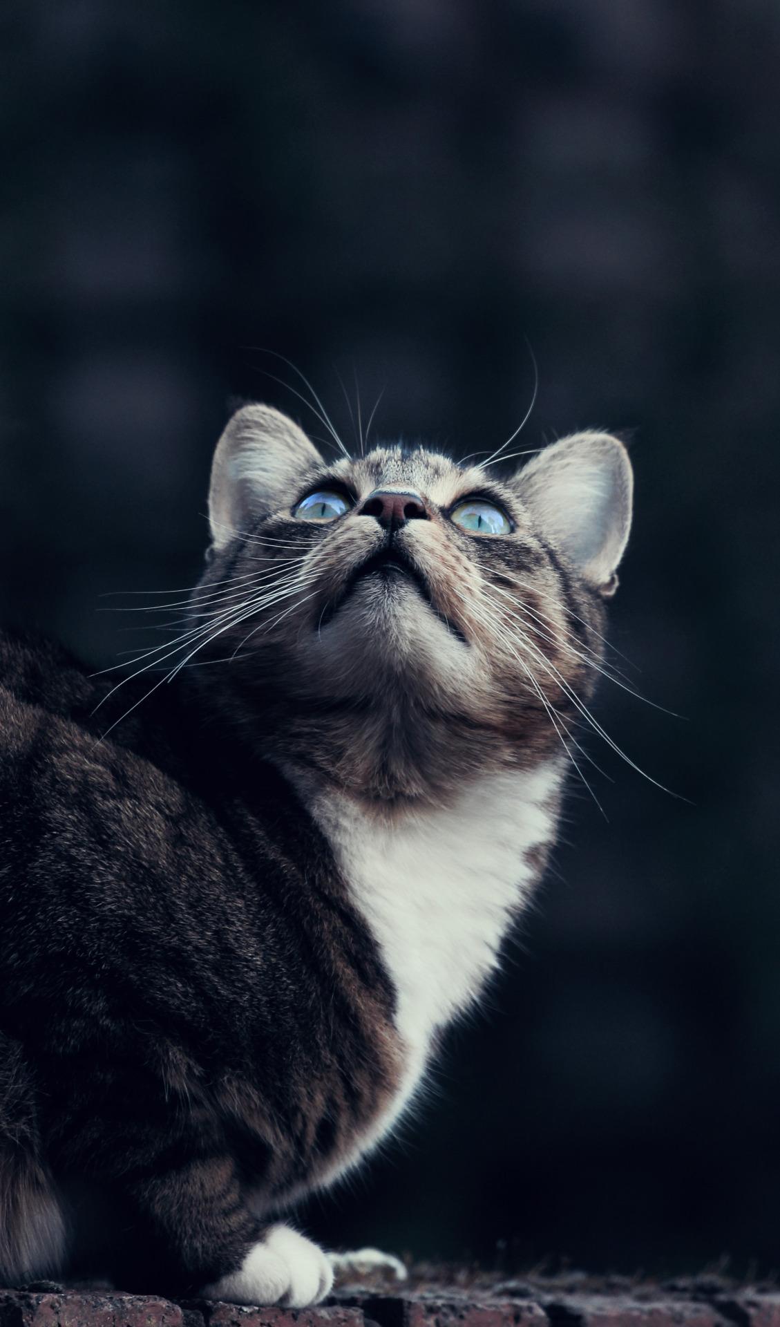 Shadepad   Riverclan Medicine Cat Tumblr_n4fkqxtnMp1r0m0lwo1_1280