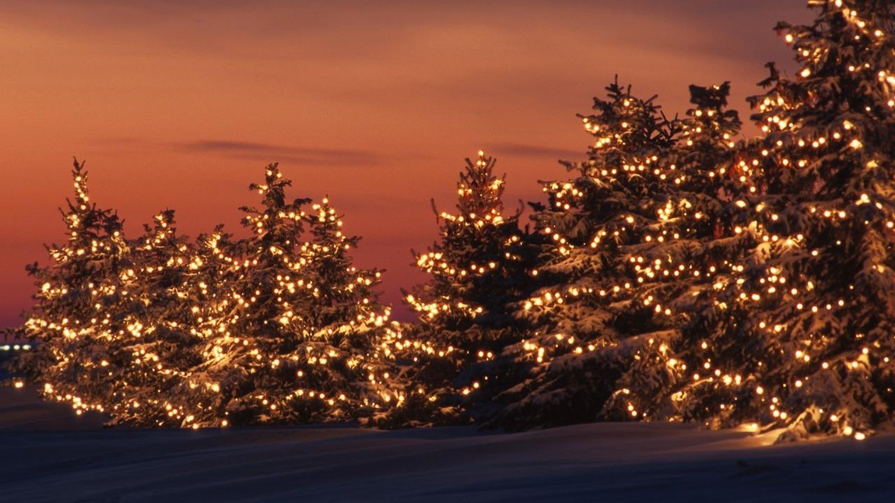 Božićna drvca - Page 2 Tumblr_mw9lmjC9fv1ssqam8o1_1280