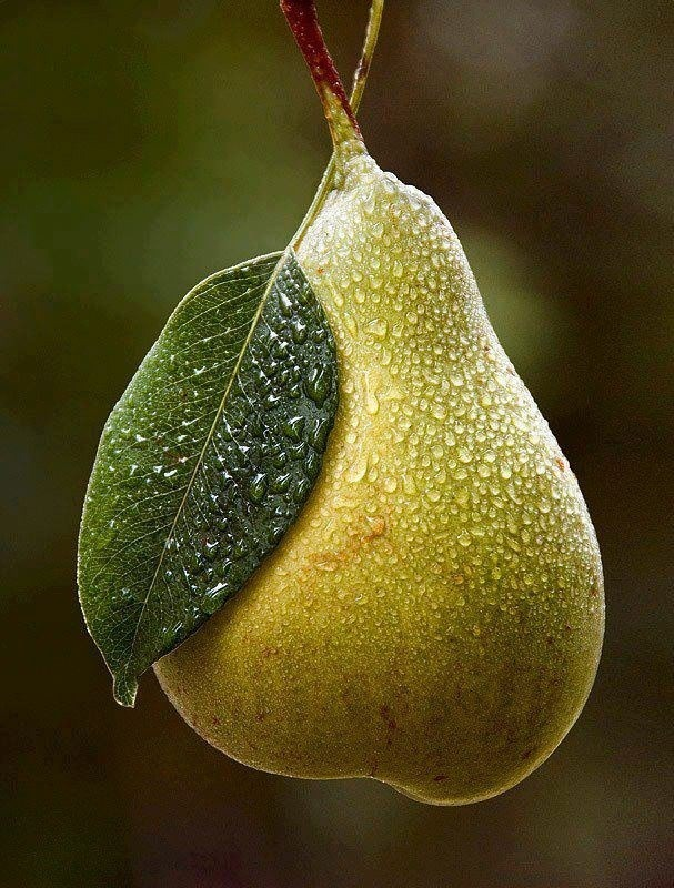 Volim voće - Page 23 Tumblr_ncd77wtcVF1sg22dvo1_1280