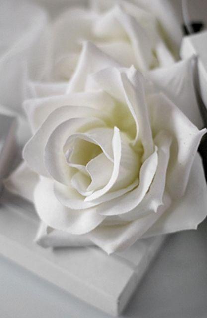 Volim bijelo - Page 33 Tumblr_n8hzl0eYul1sg22dvo1_500