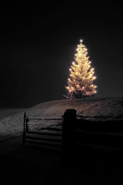 Božićna drvca - Page 4 Tumblr_nztb77kpH21s59yrco1_500