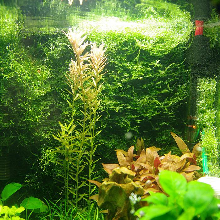 Nano 30L planté - Page 4 Tumblr_nsknydPOwo1u6kueno1_1280