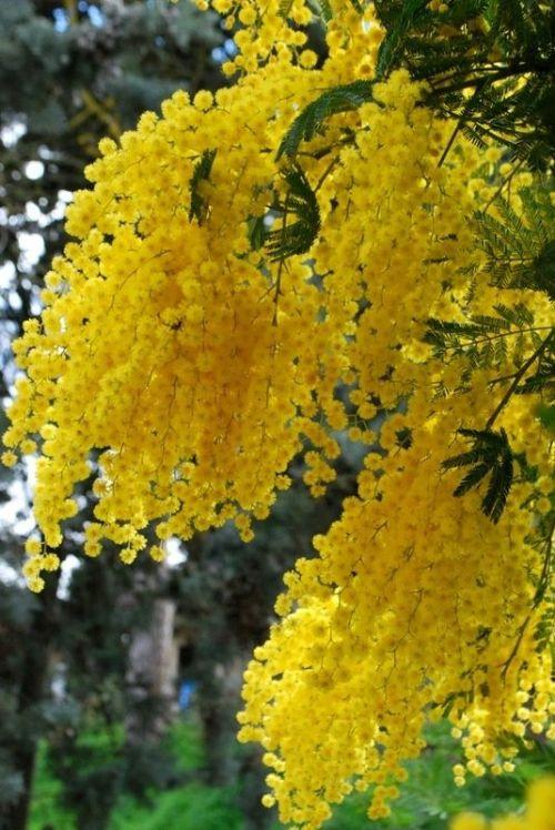 Volim žuto - Page 18 Tumblr_n7vllusqz31sg22dvo1_500