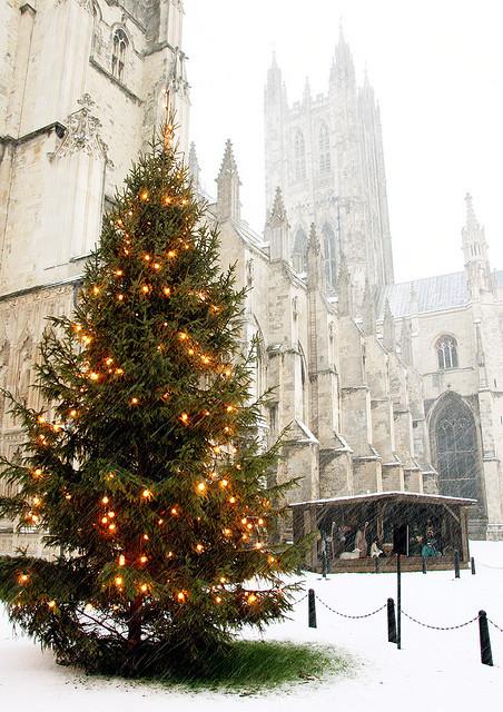 Božićna drvca - Page 3 Tumblr_mwmtbdgeeT1t07p5bo1_500