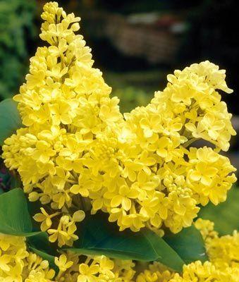 Volim žuto - Page 18 Tumblr_n7vmszo3W91sg22dvo1_400