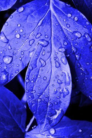 Volim plavo - Page 37 Tumblr_n1yptunMTe1sg22dvo1_400