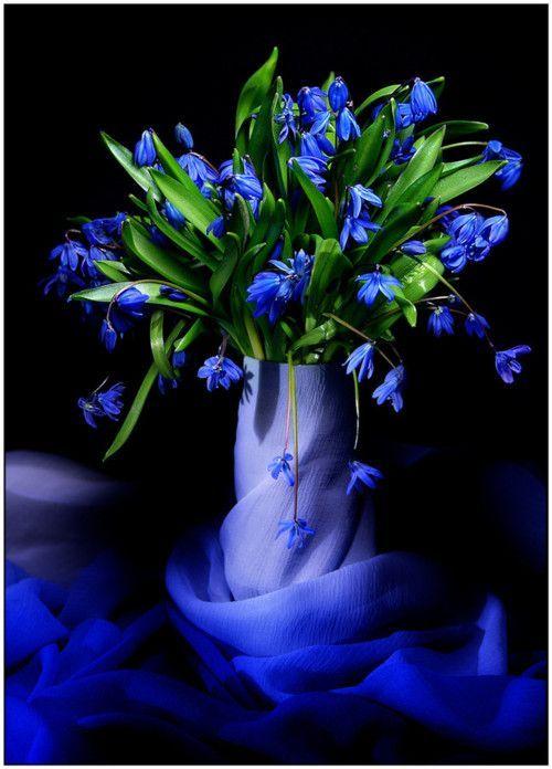 Volim plavo - Page 37 Tumblr_n1yq06UrYY1sg22dvo1_500