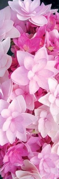 Pink color - Page 17 Tumblr_n8cawbuMWa1sg22dvo1_500