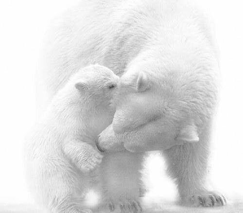 Volim bijelo - Page 34 Tumblr_n8hz0sjYIR1sg22dvo1_500