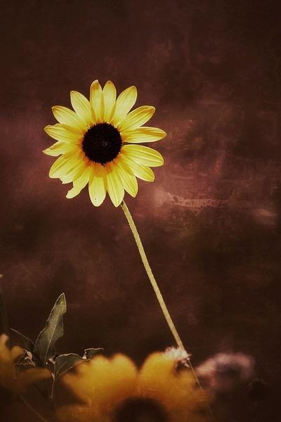 Volim žuto - Page 19 Tumblr_n9mljw05CJ1sg22dvo1_400