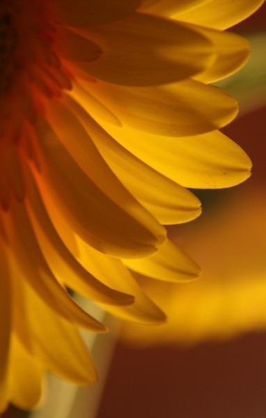 volim narančasto - Page 20 Tumblr_n53nunvo5g1sg22dvo1_400