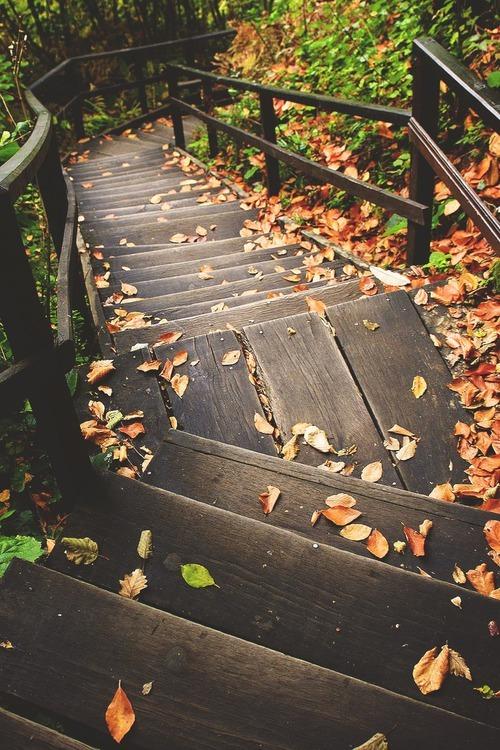 Empieza el otoño. - Página 2 Tumblr_napq4viOyw1saucvno1_500