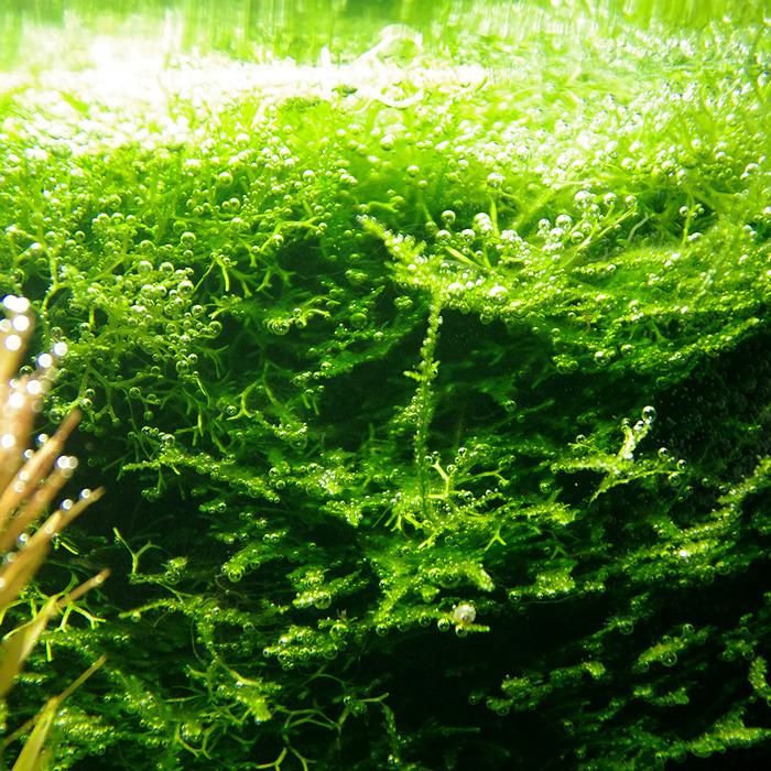 Nano 30L planté - Page 4 Tumblr_nsknydPOwo1u6kueno2_1280