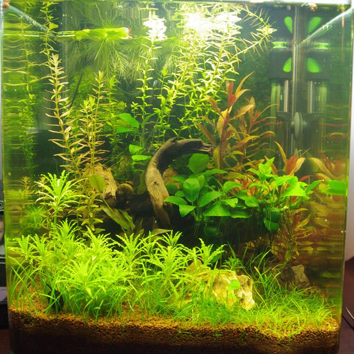 Nano 30L planté - Page 6 Tumblr_nxz6joAUHq1u6kueno3_1280