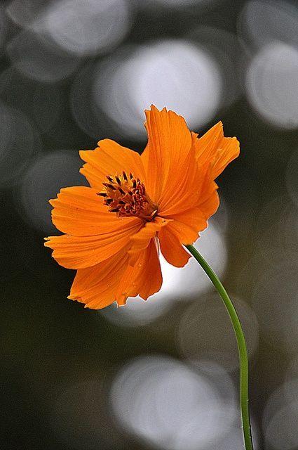 volim narančasto - Page 19 Tumblr_n24cl909C11sg22dvo1_500