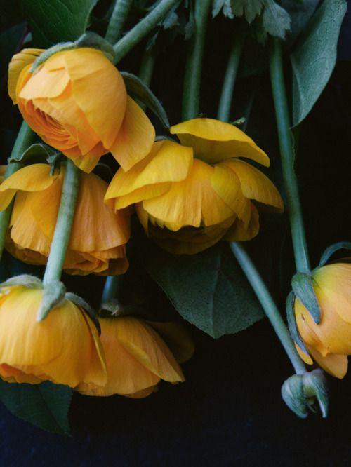 volim narančasto - Page 20 Tumblr_n53o3sJmCf1sg22dvo1_500