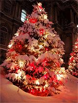 Božićna drvca - Page 3 Tumblr_mxgni8Gi701rmvs4co7_250