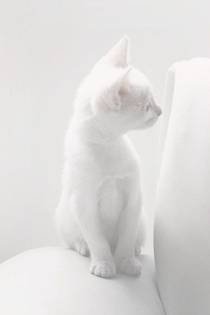 Volim bijelo - Page 34 Tumblr_n8hz6s74tA1sg22dvo1_500