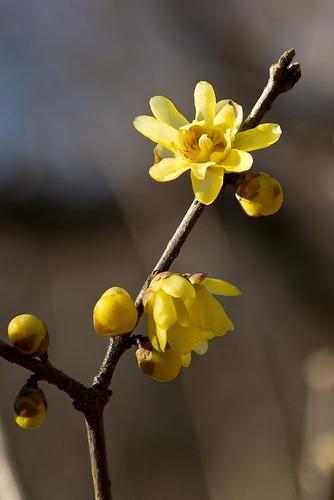 Volim žuto - Page 18 Tumblr_n9mm3iErOb1sg22dvo1_400
