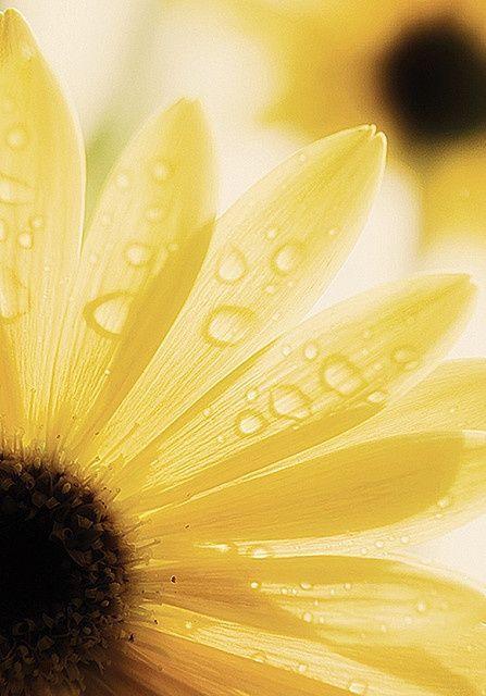 Volim žuto - Page 19 Tumblr_n9mloh8Rou1sg22dvo1_500