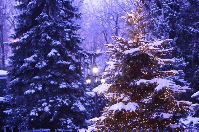 Božićna drvca - Page 2 Tumblr_nel16zLH9Y1rkia8ro1_1280