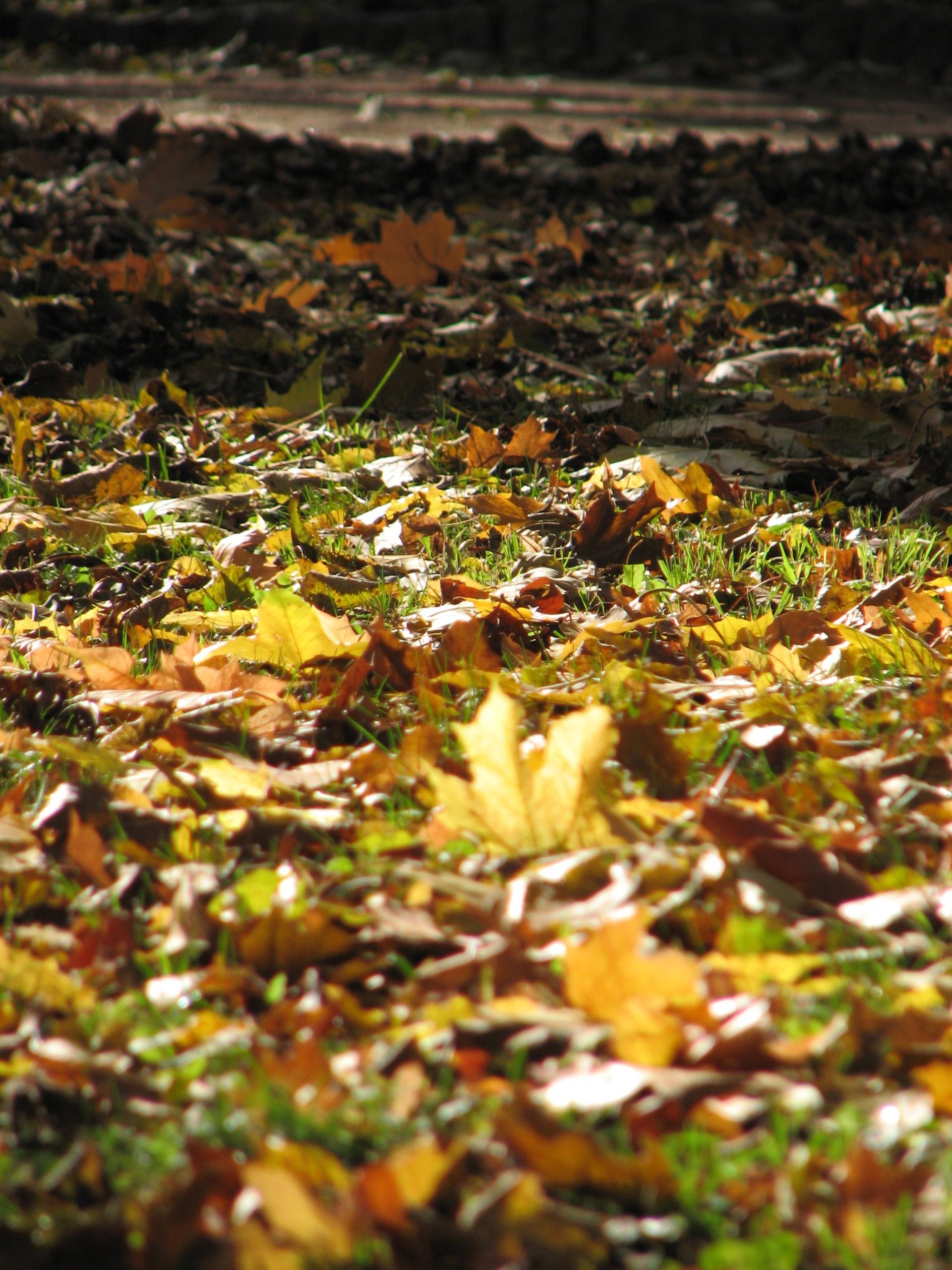 Ода Осени - Страница 2 577251